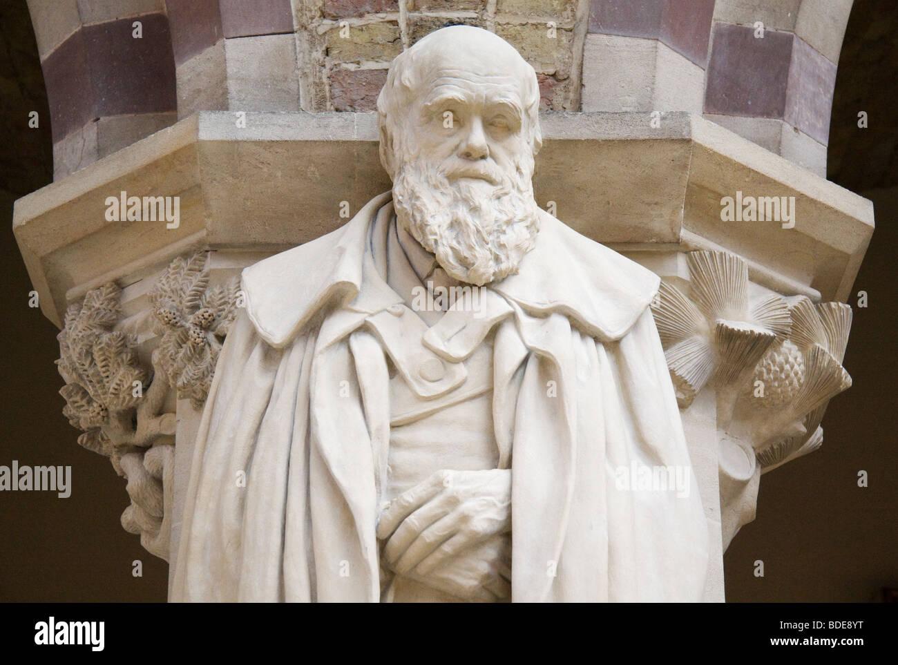 Statue of Darwin, Pitt Rivers Museum Oxford - Stock Image