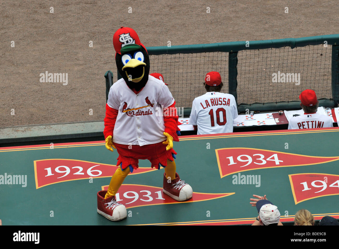 ST LOUIS - MAY 23: Fredbird, the official mascot of the Saint Louis Cardinals at Busch Stadium in St. Louis, MO - Stock Image
