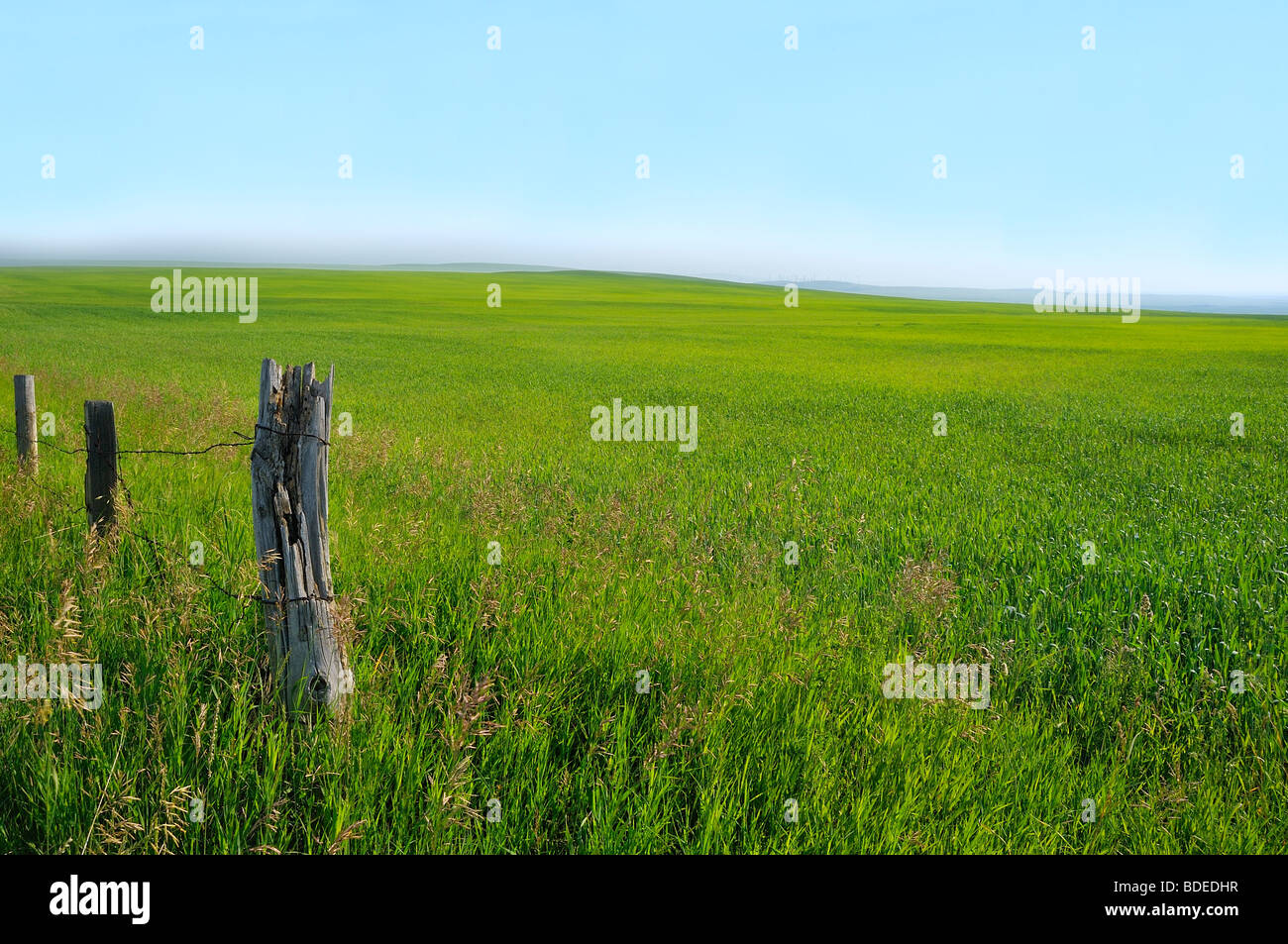 A landscape of the green grassland - Stock Image