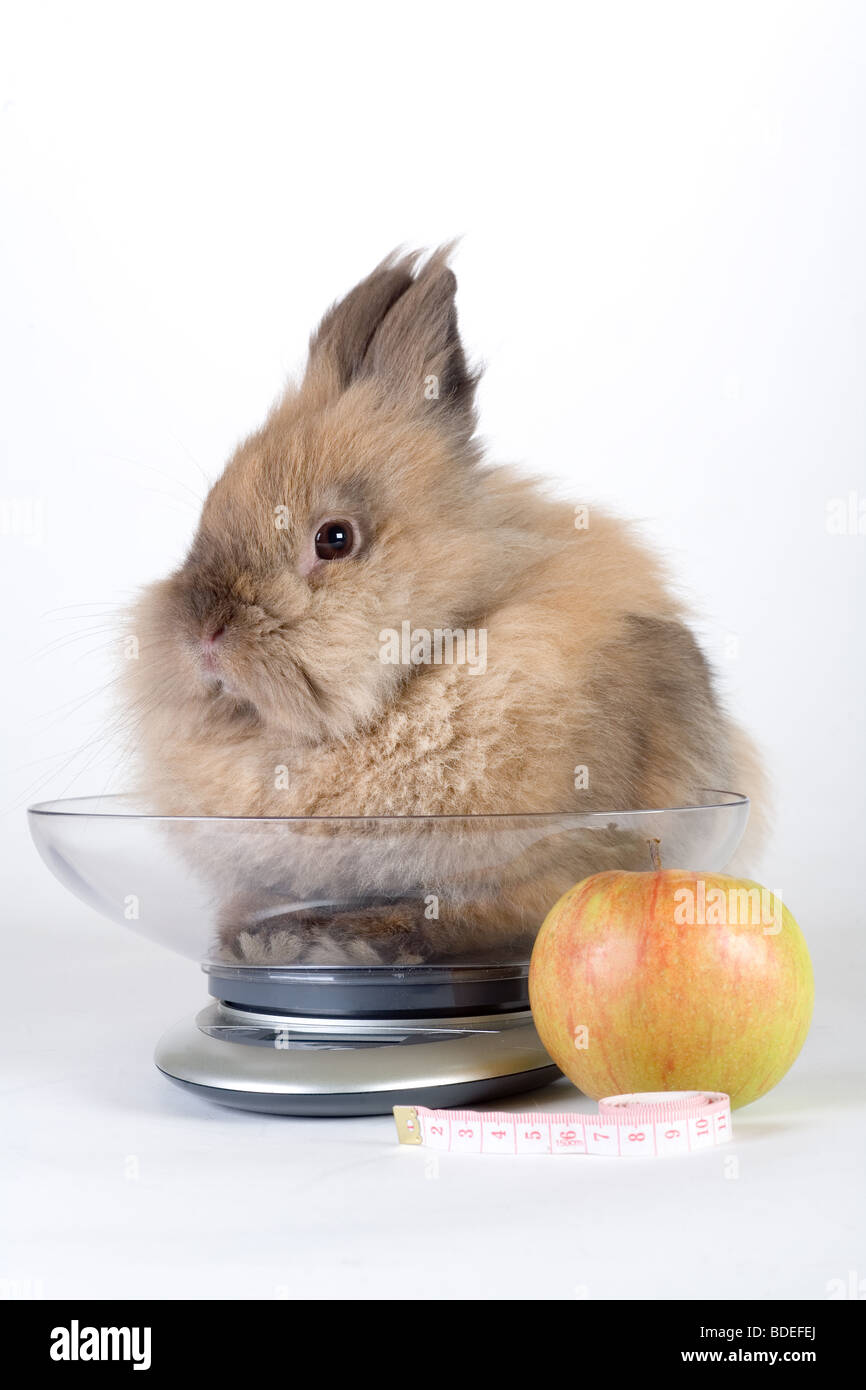 brown bunny with apple, metric tape, scale, isolated on white background - Stock Image