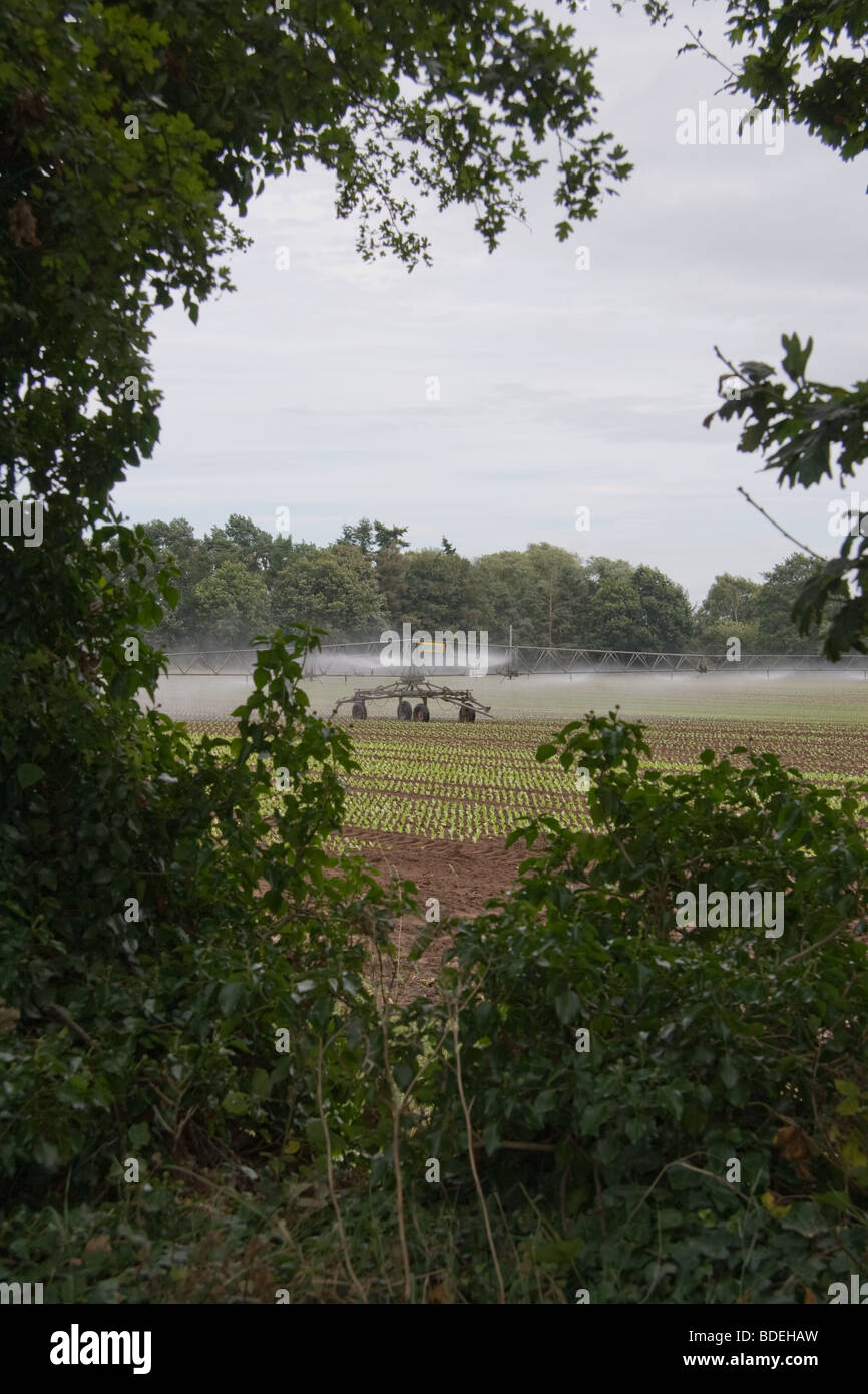 Field of crops being automatically irrigated - Stock Image