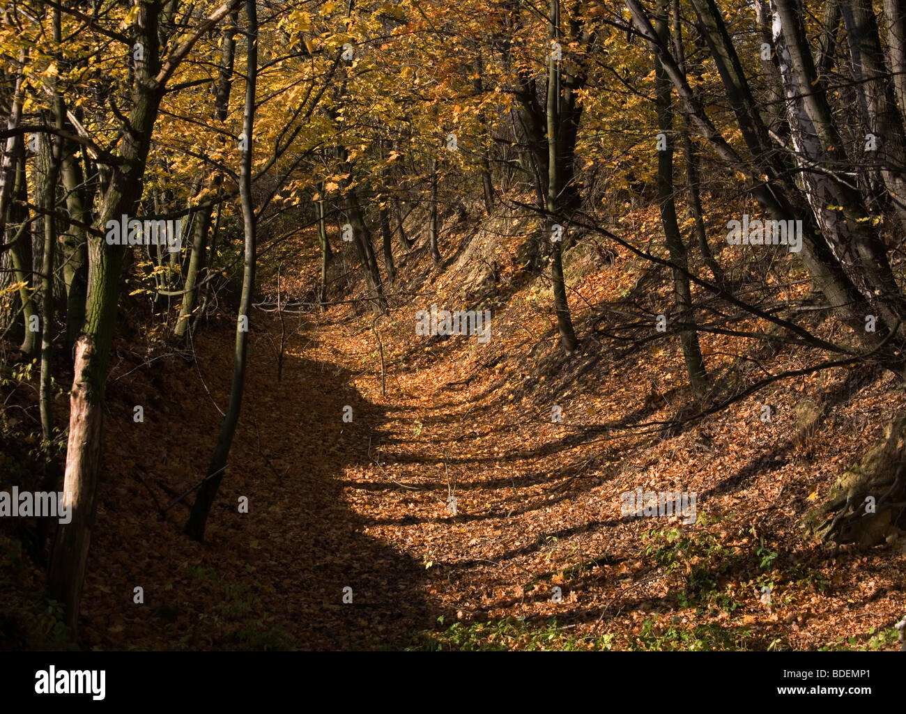 Lesser Poland nature trees - Stock Image