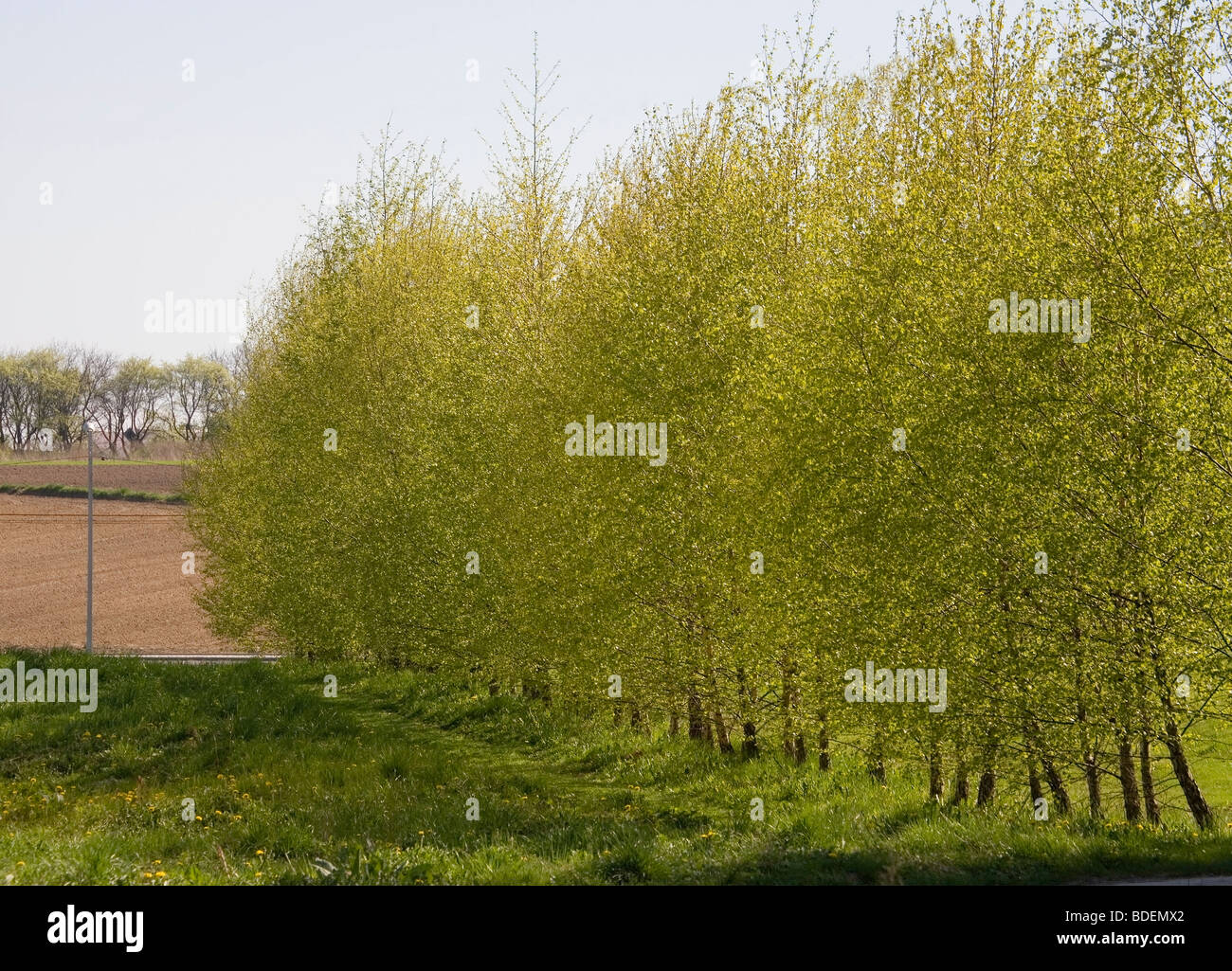 Lesser Poland at spring - Stock Image