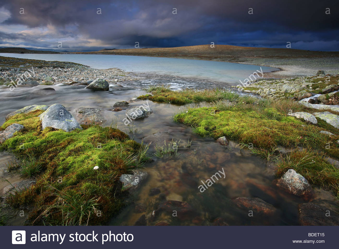 Green moss and river stream near Snøheim, in Dovrefjell national park, Dovre, Norway. - Stock Image