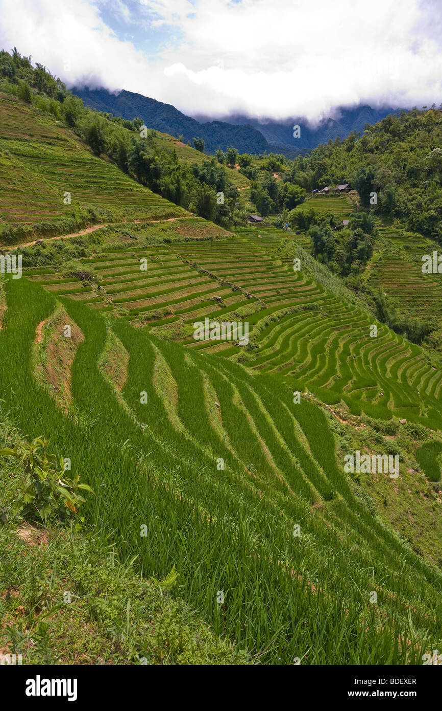 Steep hillsides in Sapa, north Vietnam, with narrow green terraces for farming rice - Stock Image