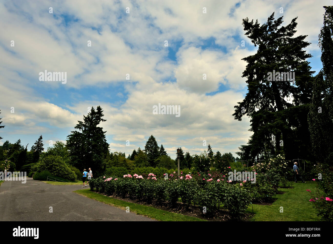 Rose Garden In Portland, Oregon, USA   Stock Image