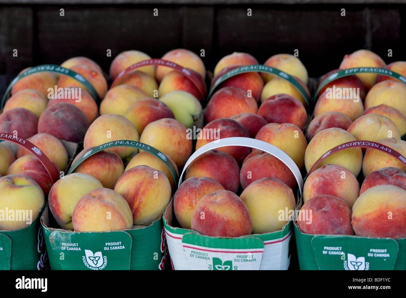 Ontario Locally Grown Peaches, Niagara Orchards. - Stock Image