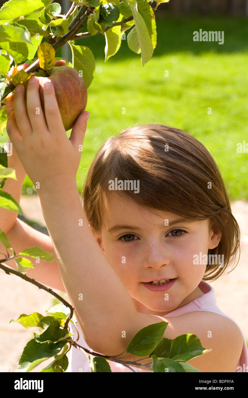 Healthy eating for children, pick your own apples in the garden. Encouraging children to get one of their five a - Stock Image