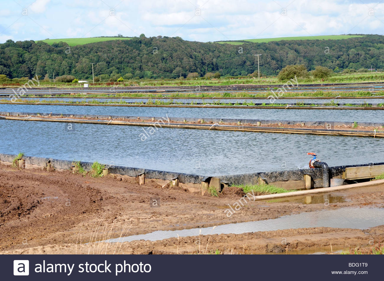 Tanks holding farmed lugworms Carmarthenshire Wales Cymru UK - Stock Image