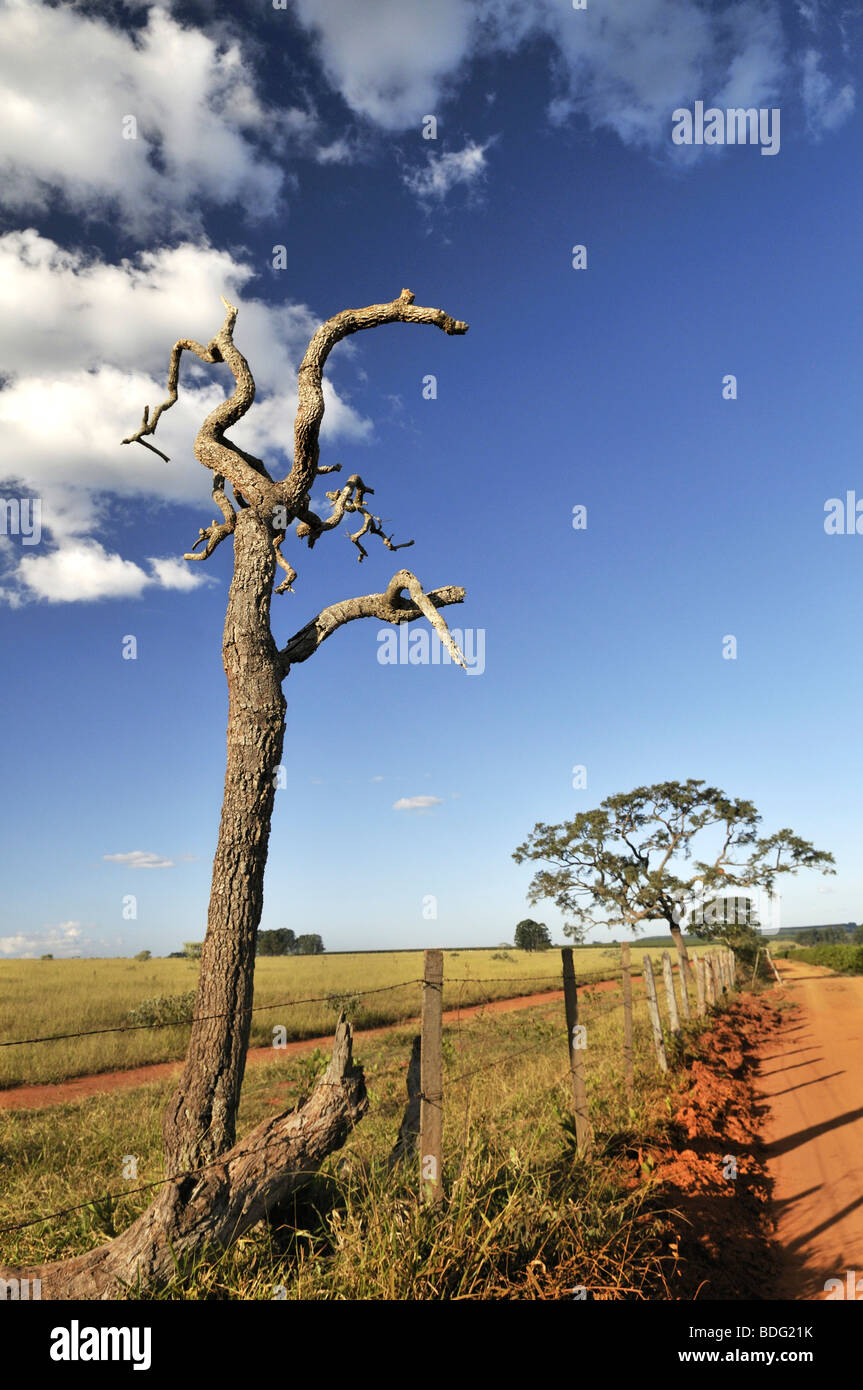 Landscape with a crippled dead tree, Brazil, South America - Stock Image