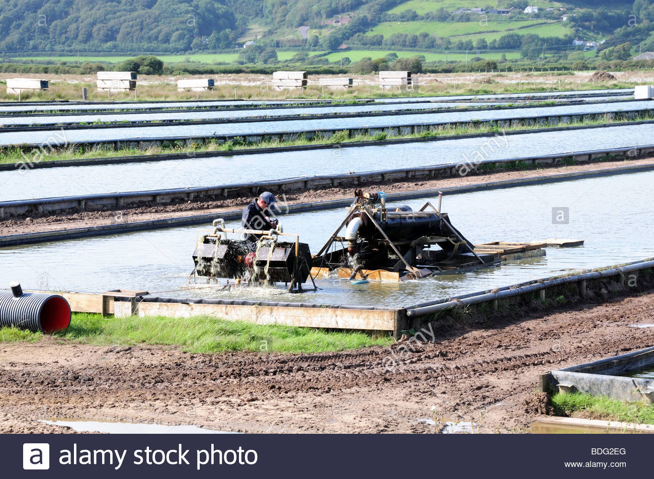 Lugworm Farmer working on a worm harvesting machine Carmarthenshire Wales Cymru UK - Stock Image