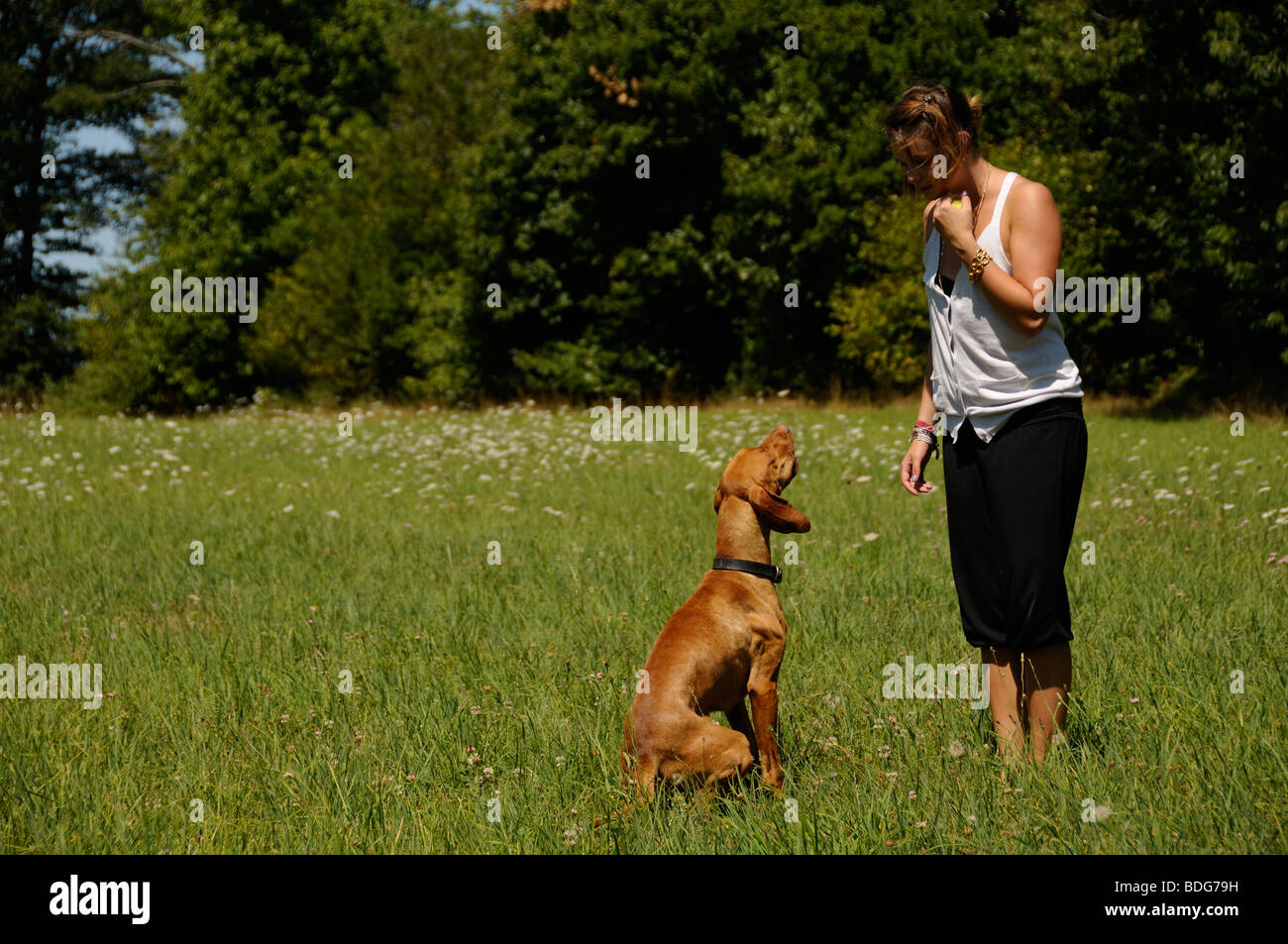 Stock photo of a teenage girl training her dog. - Stock Image