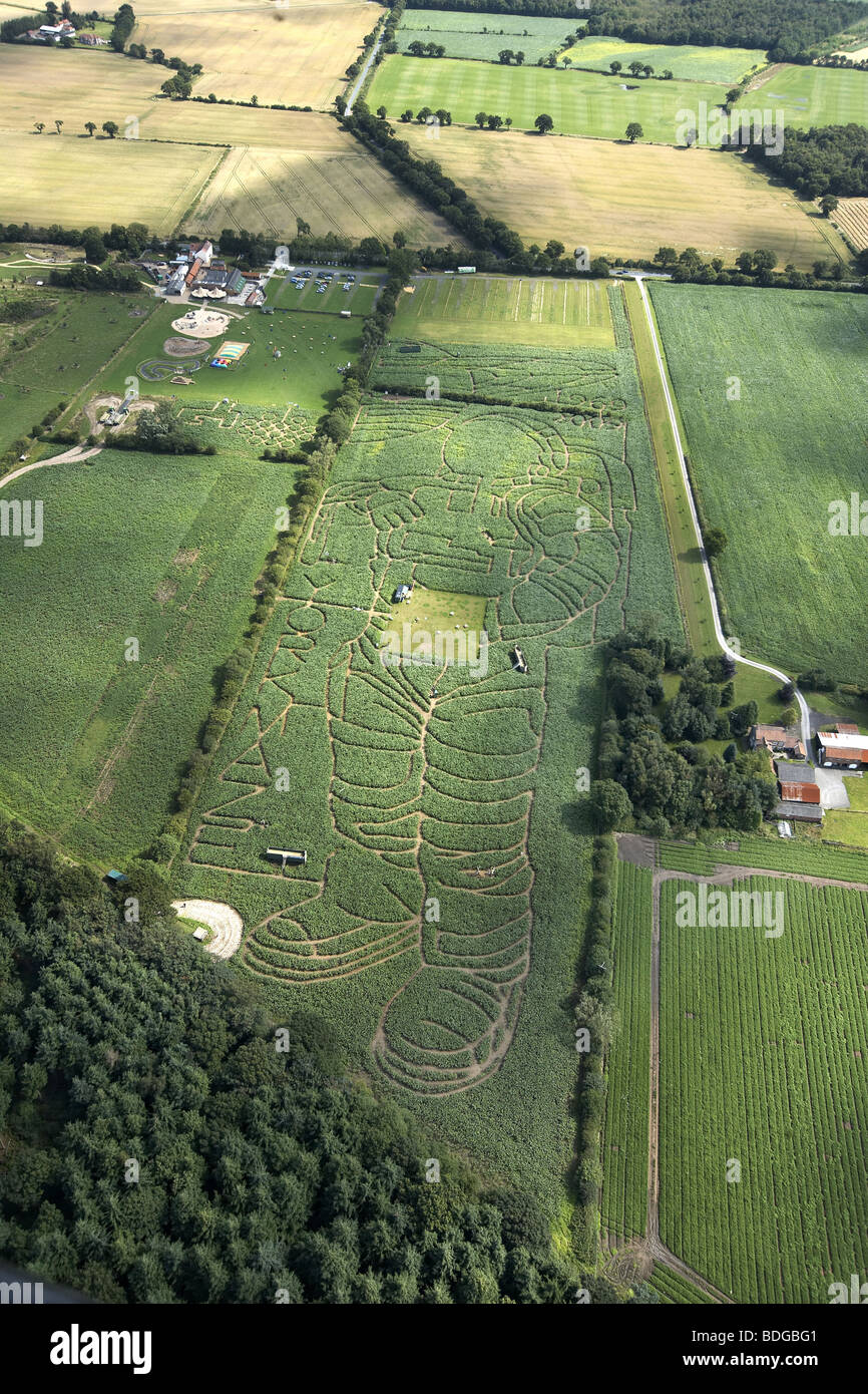 The York Maize Maze. The image of an astronaut cut in a field of maize marks the 40th anniversary of the 1st Apollo - Stock Image