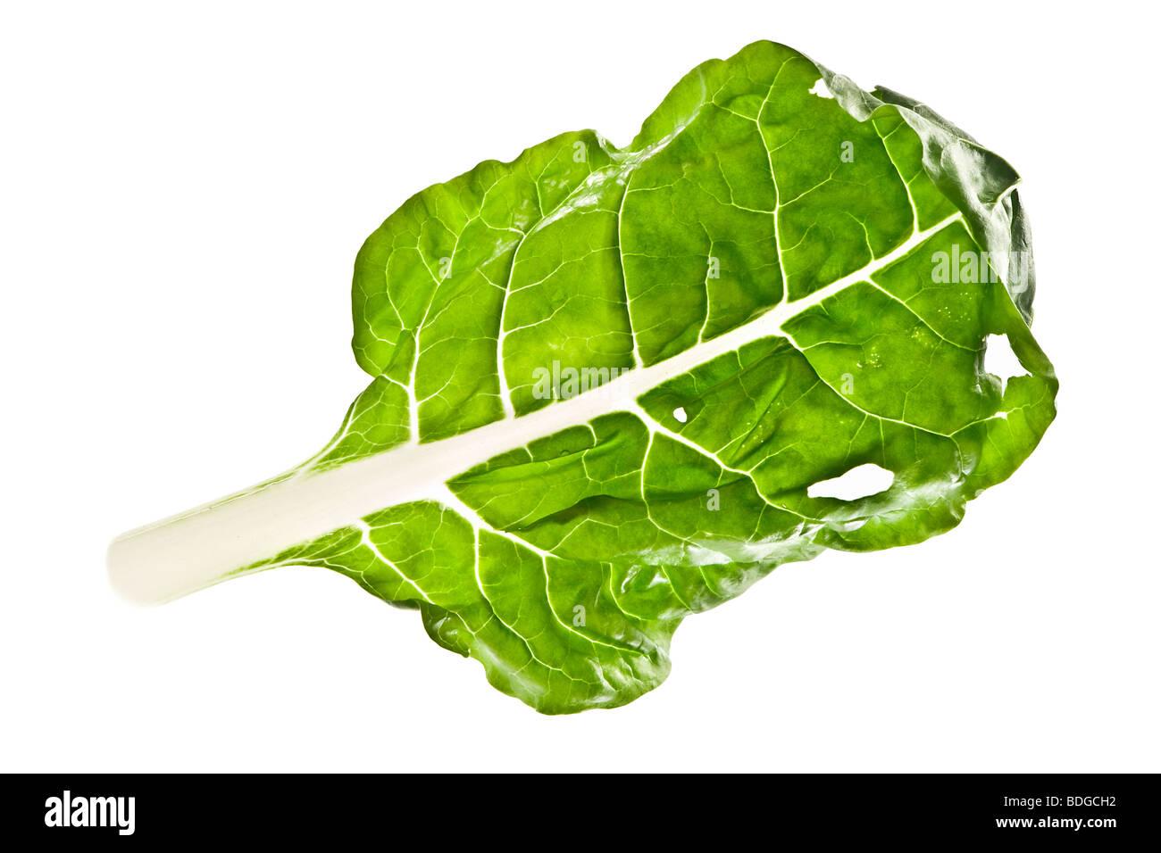 leaf of bok choy isolated - Stock Image