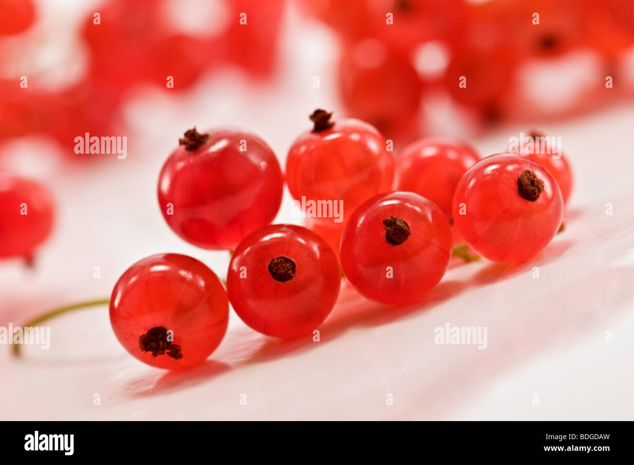 twig of red currant - Stock Image