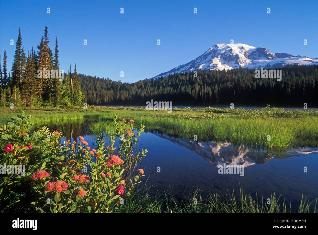 Mount Rainier and Reflection Lake; Mount Rainier National Park, Washington. - Stock Image