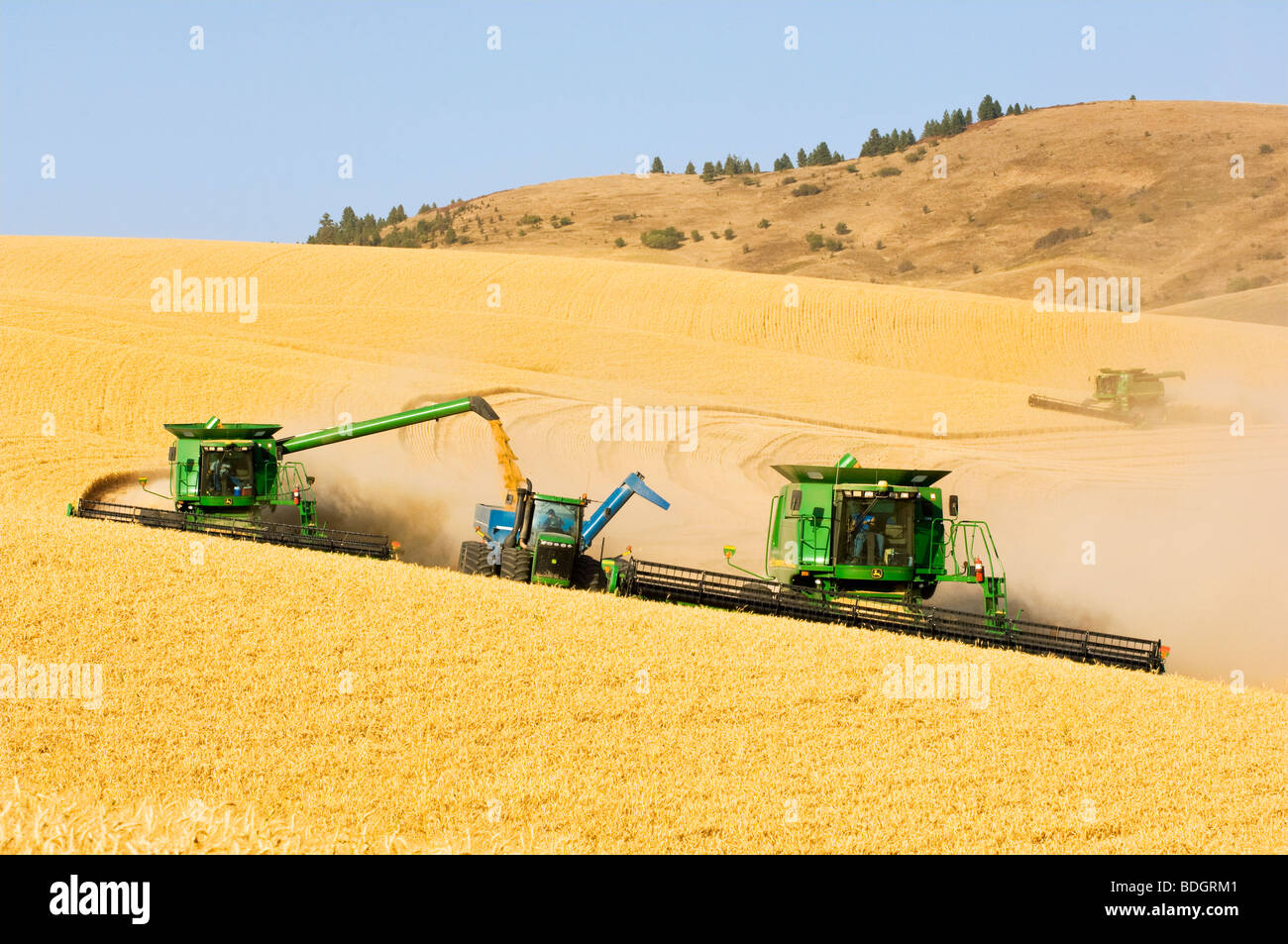 "Two combines harvest Soft White wheat on rolling hillside terrain while one combine unloads into a grain wagon ""on - Stock Image"