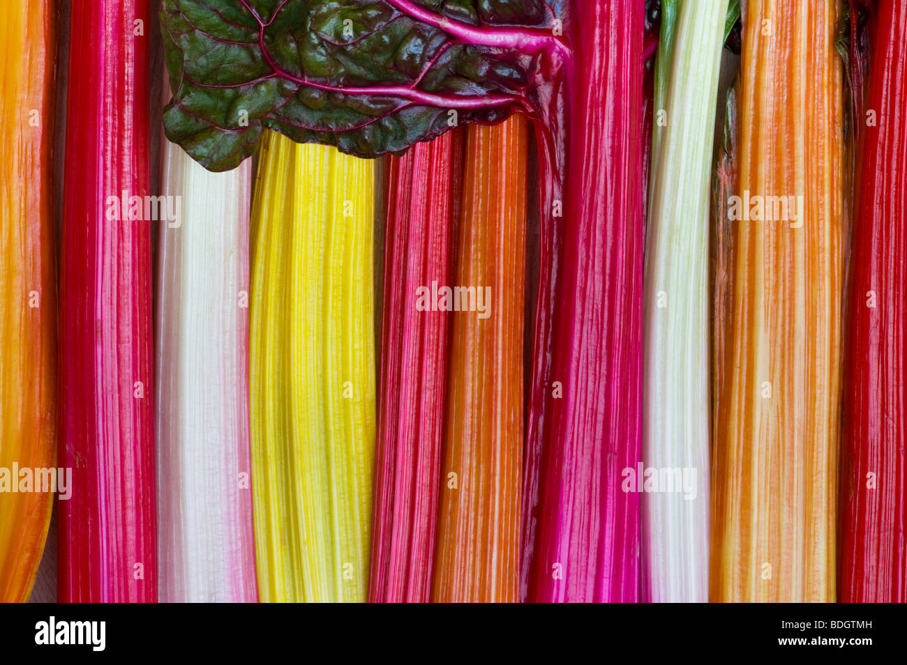 Rainbow chard vegetable pattern - Stock Image