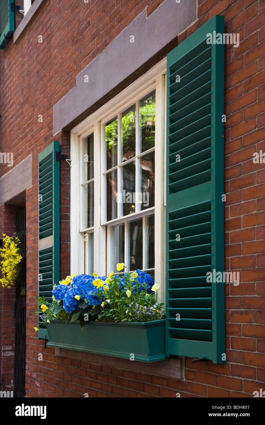 FLOWERS in a WINDOW BOX of a classic BRICK HOUSE on BEACON HILL - BOSTON, MASSACHUSETTS - Stock Image