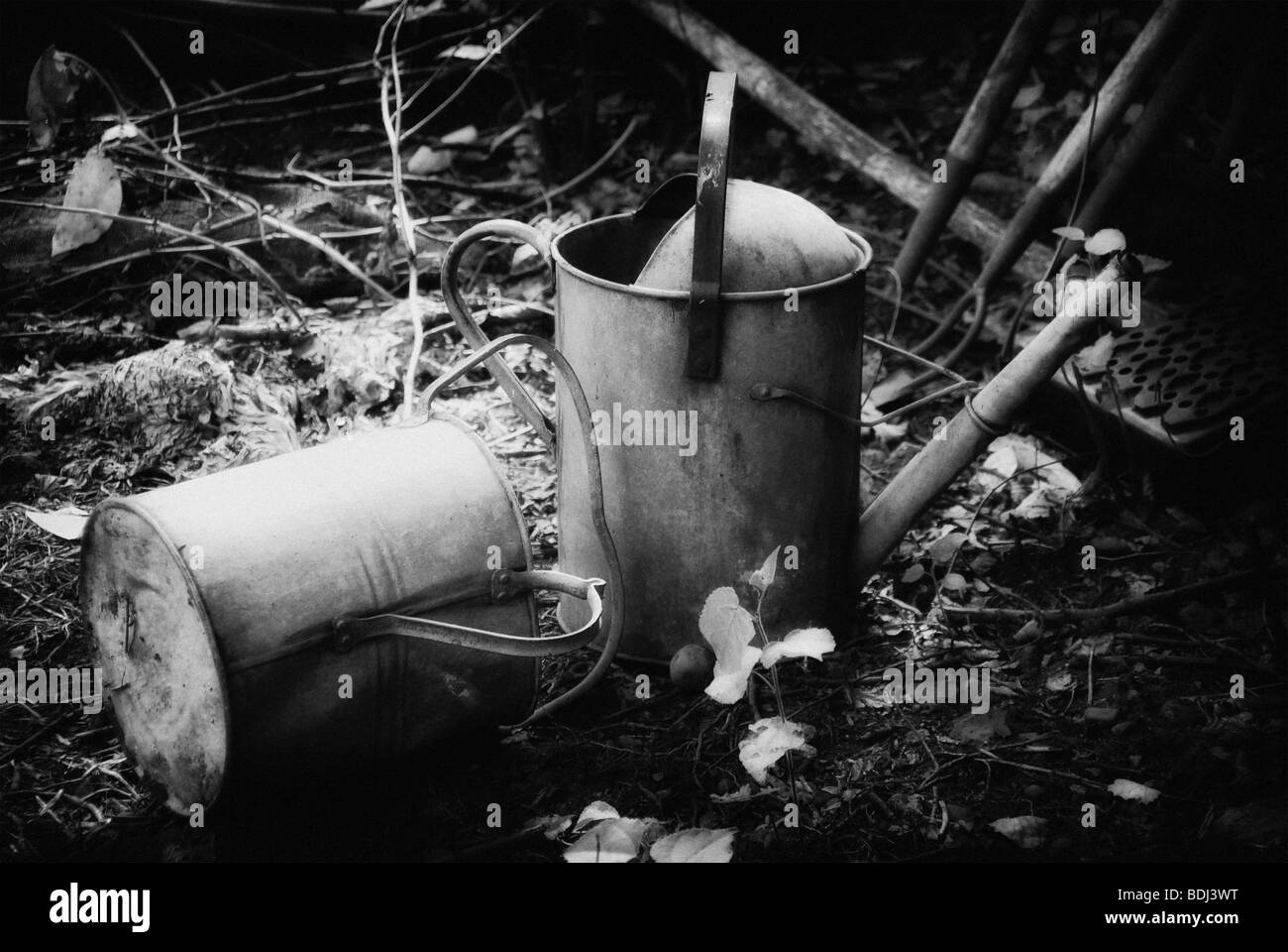 Two Galvanized Watering Cans - Stock Image