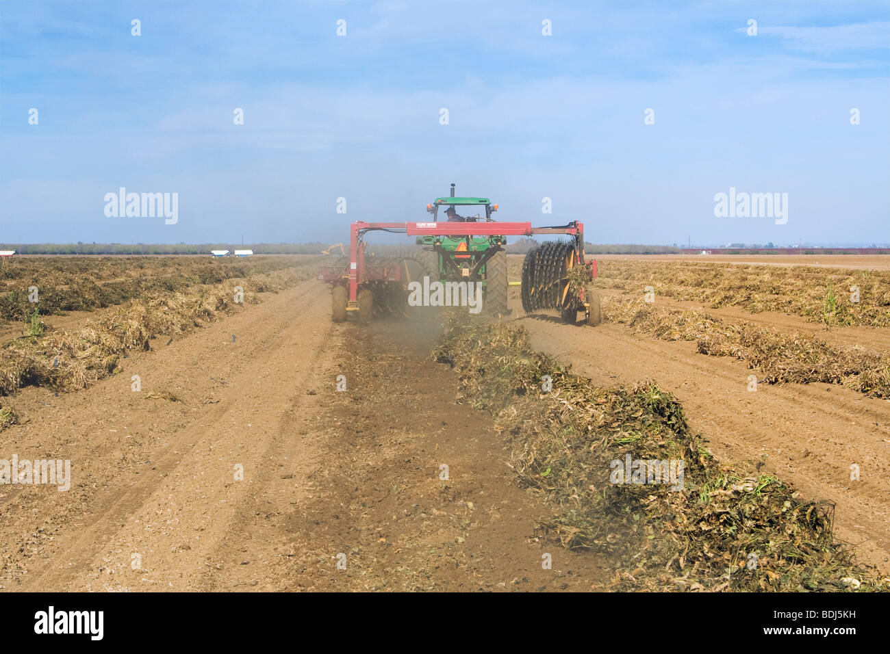 A tractor with a windrower turns rows of cut dry beans to facilitate even drying prior to harvest / Arbuckle, California, - Stock Image