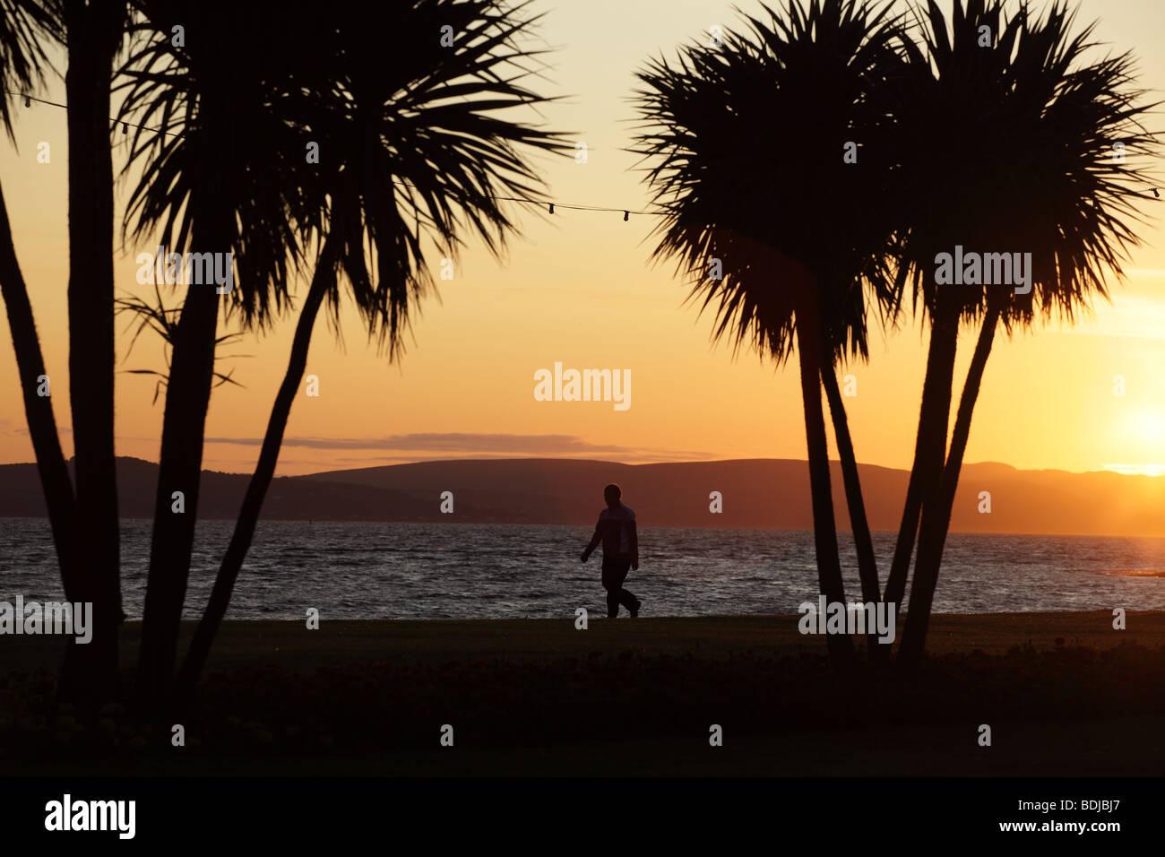 Person walking between palm trees at sunset, Scotland, UK - Stock Image