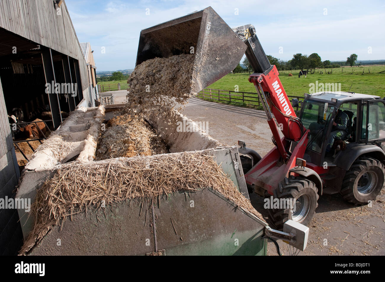 how to make cattle feed