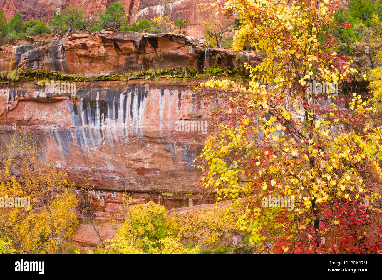Fall color and cascade at the lower Emerald Pools, Zion National Park, Utah Stock Photo