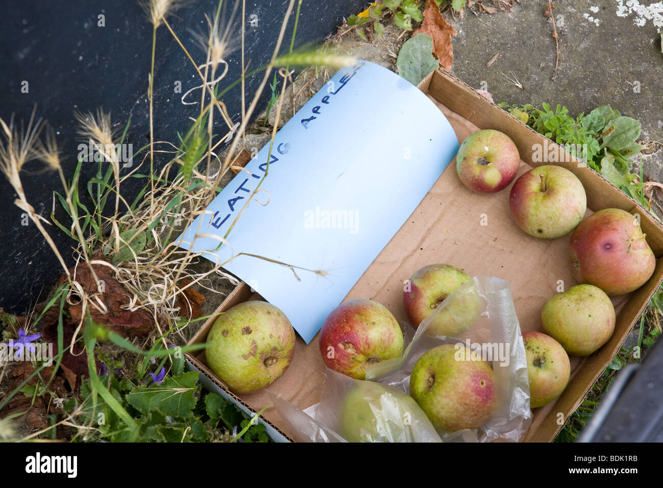 apples in a cardboard box being given away by the side of the road in an English country village - Stock Image