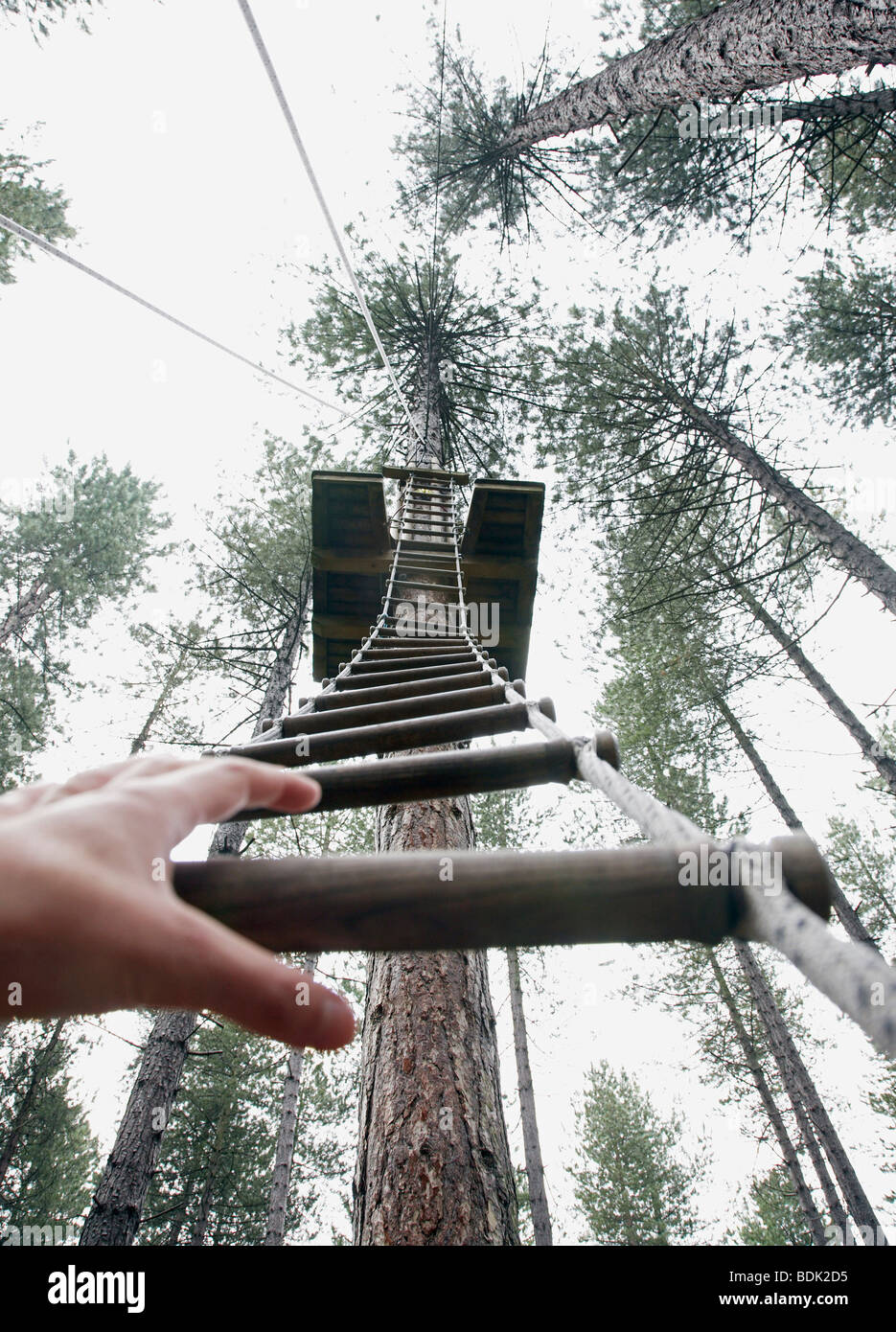 a hand reaches to grab a rope ladder to climb to the top of a tree - Stock Image
