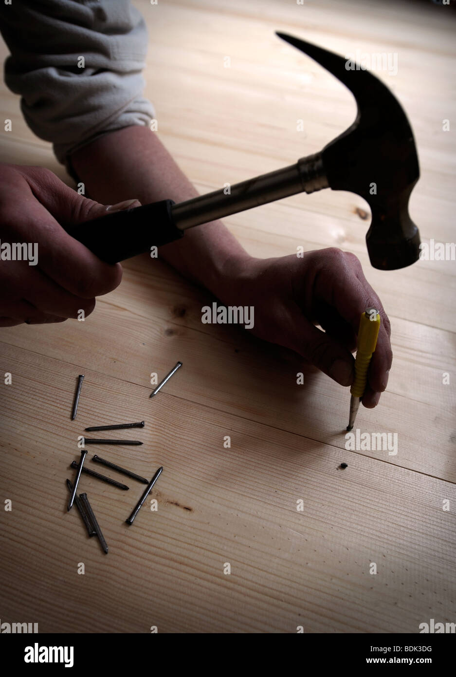USING A PUNCH TO DRIVE HOME NAILS WITHOUT MARKING WOODEN FLOORING PLANKS - Stock Image