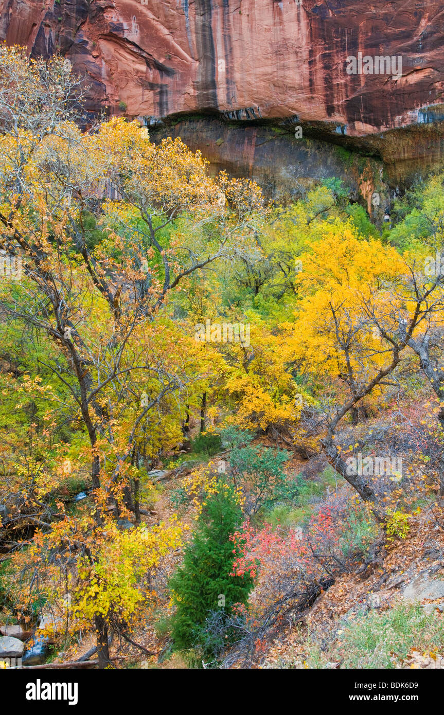 Fall color below the Weeping Wall, Zion National Park, Utah Stock Photo