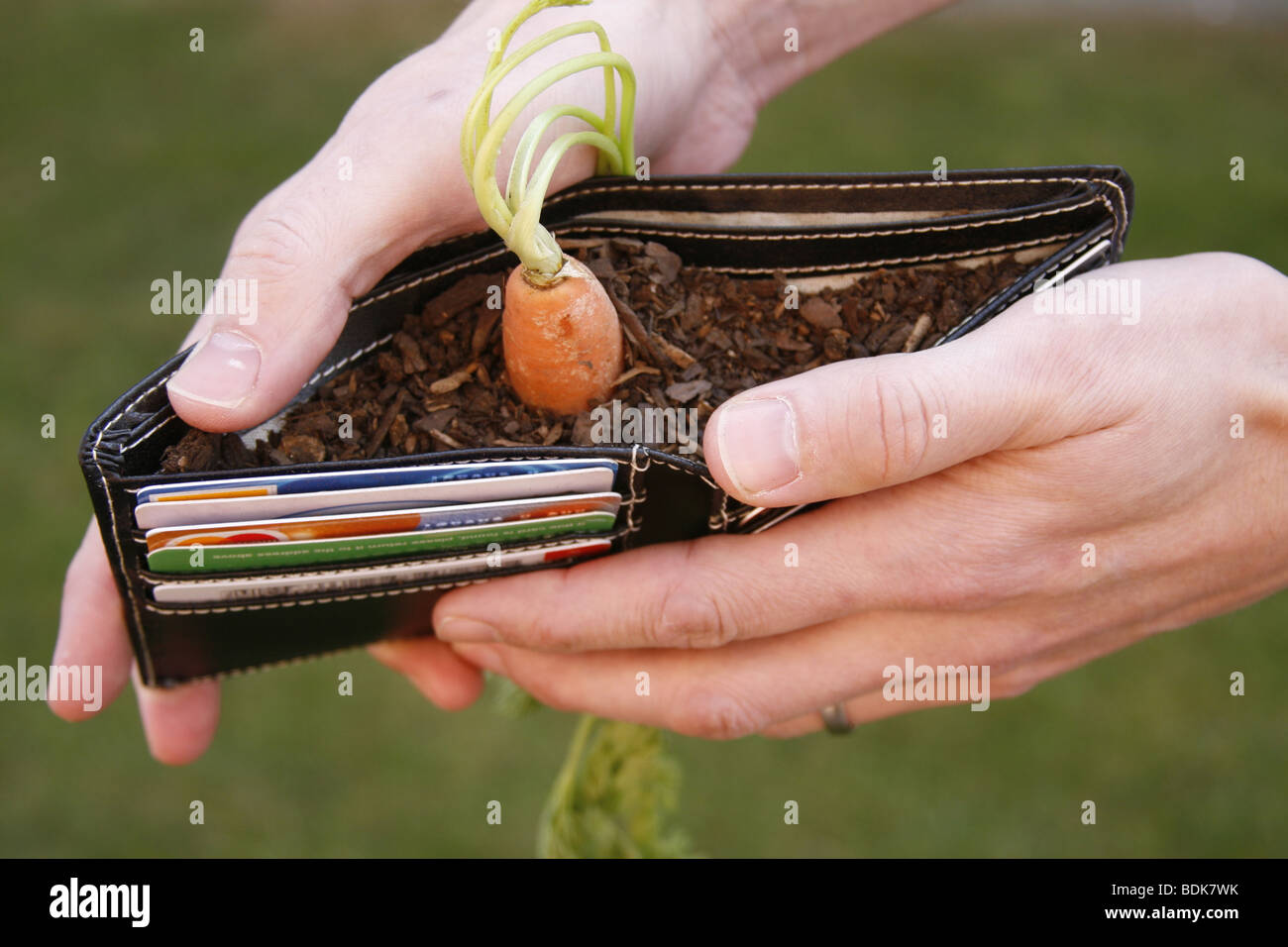 Carrot in a wallet - Stock Image
