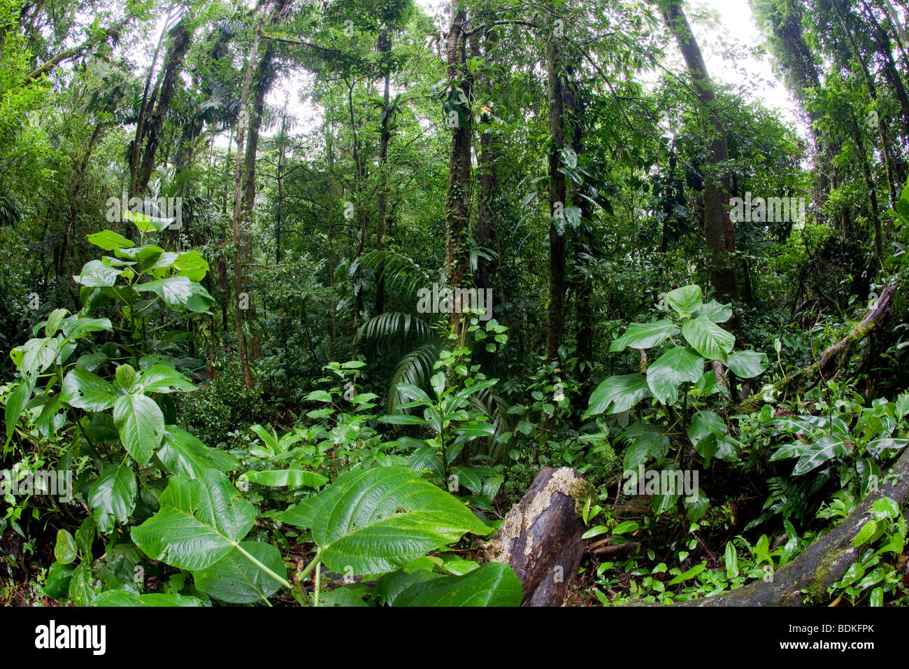 Costa Rica Rainforest - Stock Image