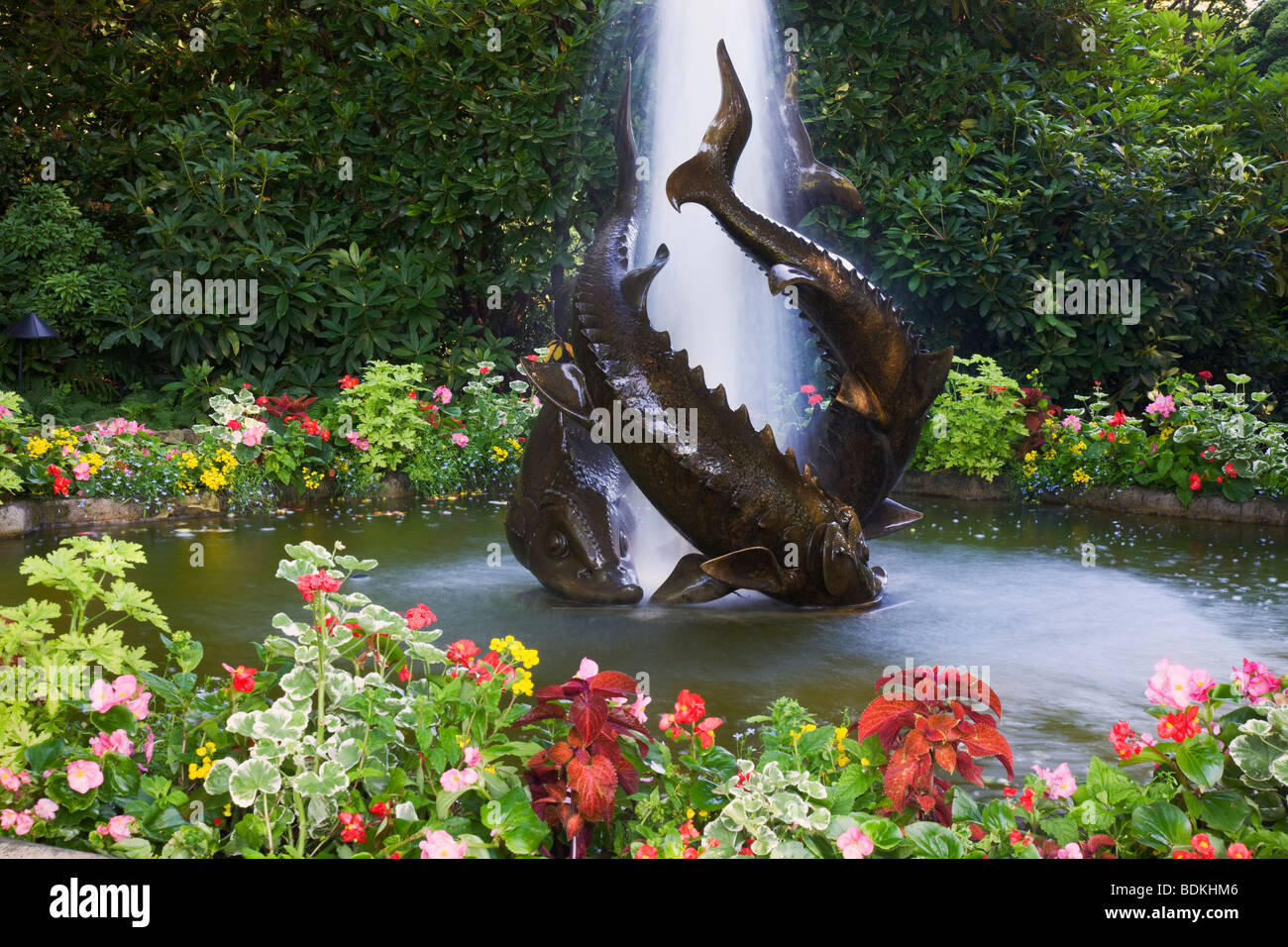 Sturgeon fountain the butchart gardens victoria vancouver island sturgeon fountain the butchart gardens victoria vancouver island british columbia canada thecheapjerseys Image collections