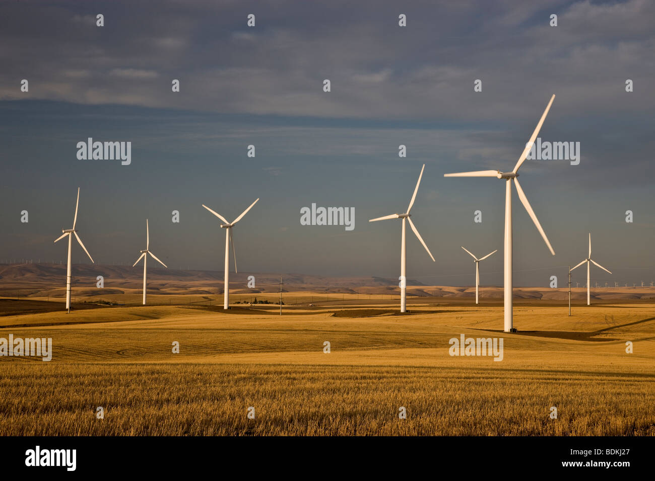 Wind turbines 'wind farm' operating in harvested wheat field. - Stock Image