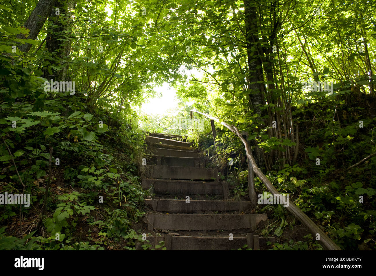 Forest stairways - Stock Image