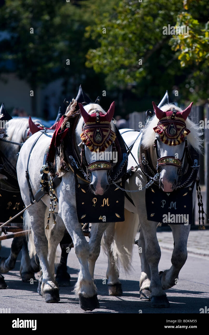 Draught horses in Bartholomä, South Germany pulling a cart - Stock Image