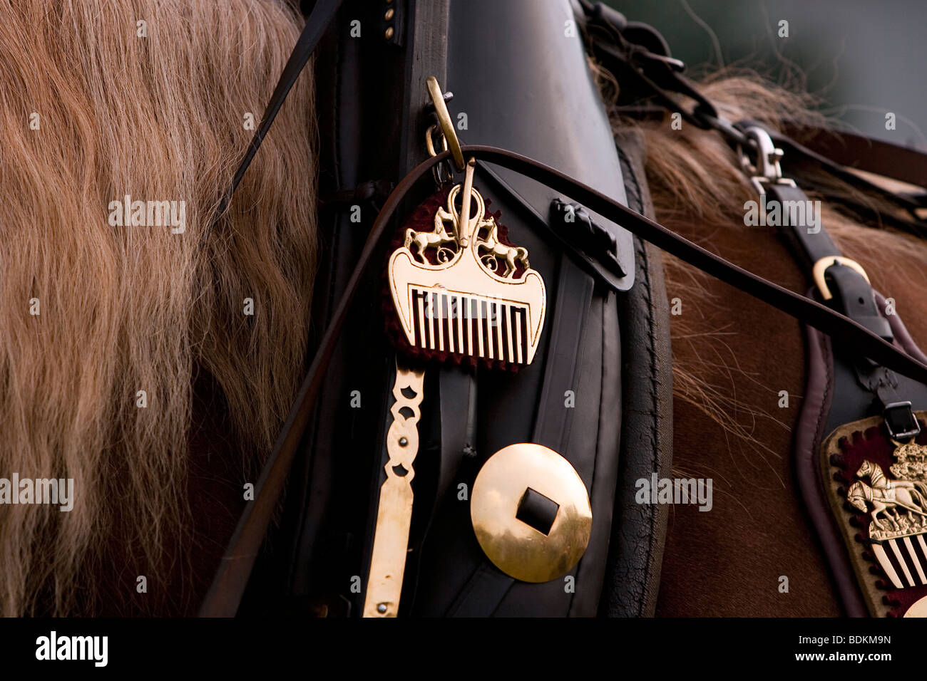 Süddeutsches Kaltblut, South German draught horse with leather harness, Rosstag, Bartholomä, South Germany - Stock Image