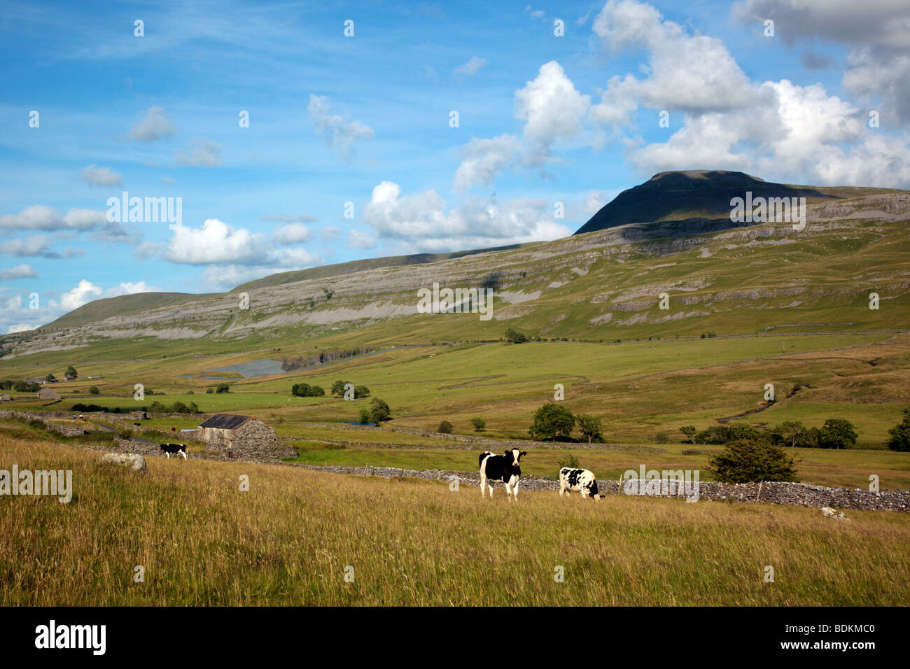 Ingleborough looking over the Doe valley from Twistleton in the Yorkshire Dales England UK - Stock Image
