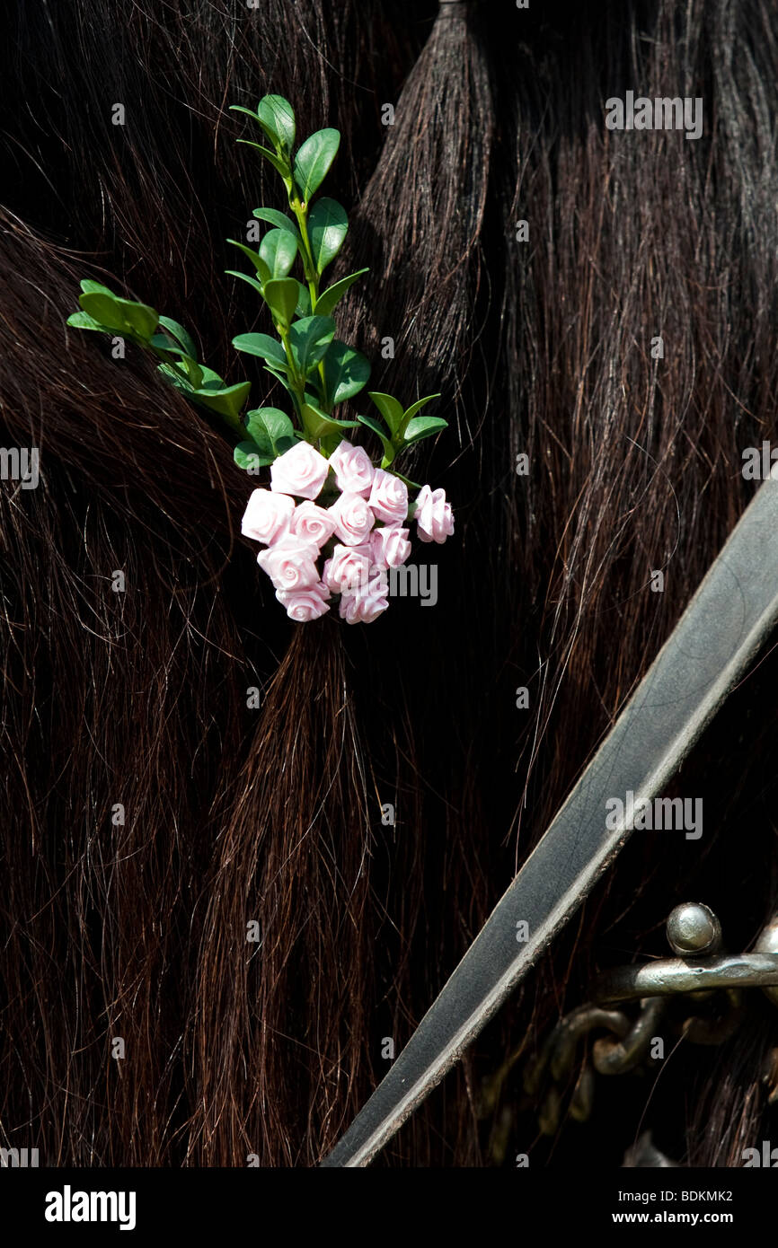 Süddeutsches Kaltblut, South German draught horse with flower decoration and leather rein, Bartholomä, - Stock Image