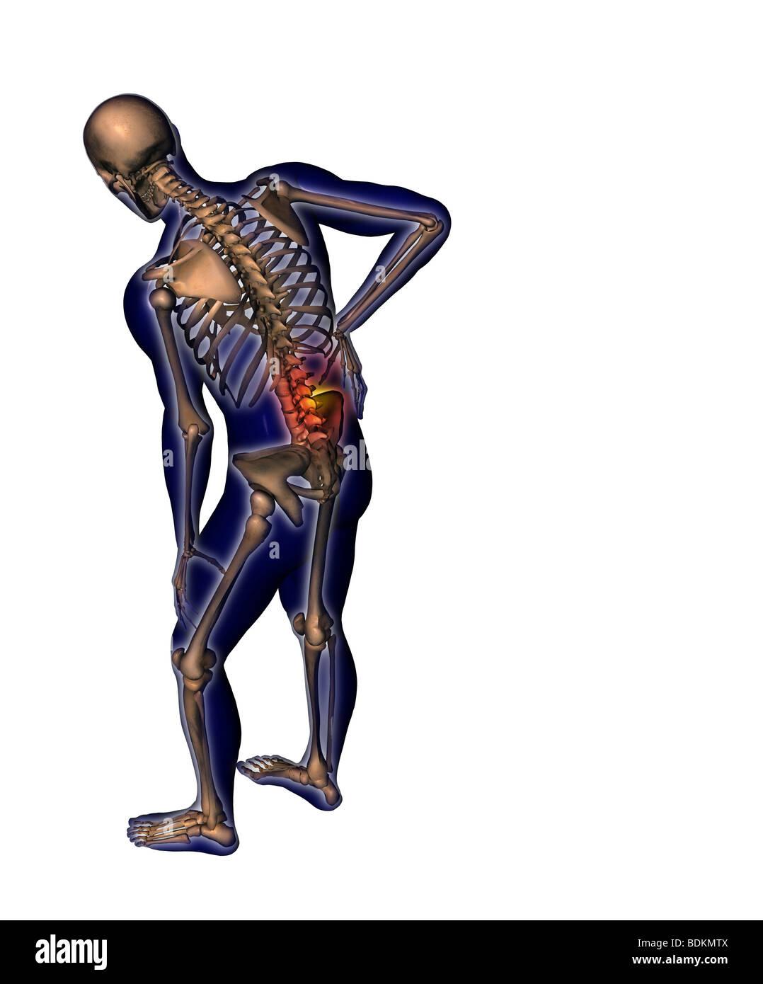 Human Anatomy Illustration Showing Stock Photo 25634362 Alamy