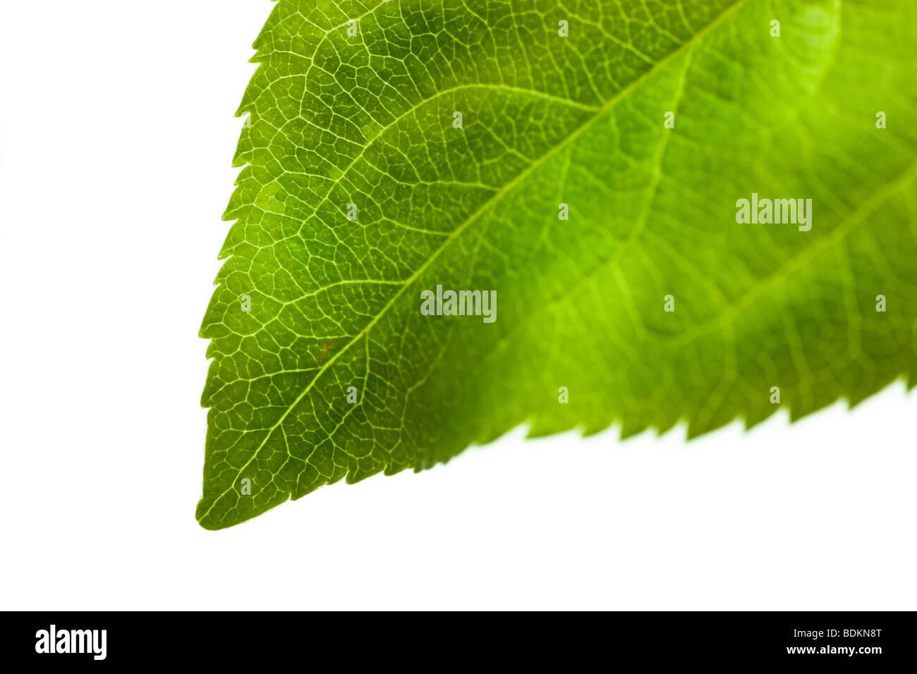 Fresh nature - Stock Image