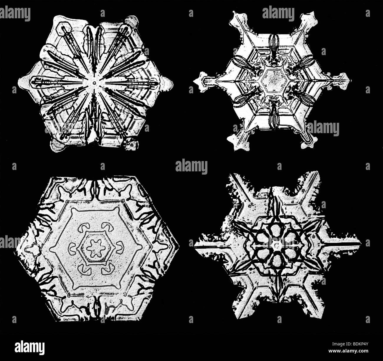 Snowflakes Photographed By Wilson Alwyn Snowflake Bentley Each