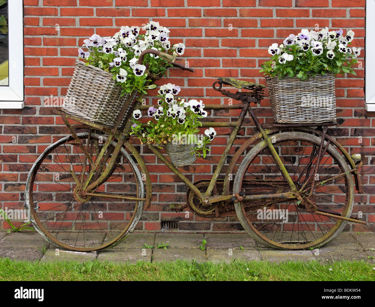 Old bicycle decorated with baskets of pansies, in the village of Kleine Huisjes, Groningen, Netherlands. - Stock Image