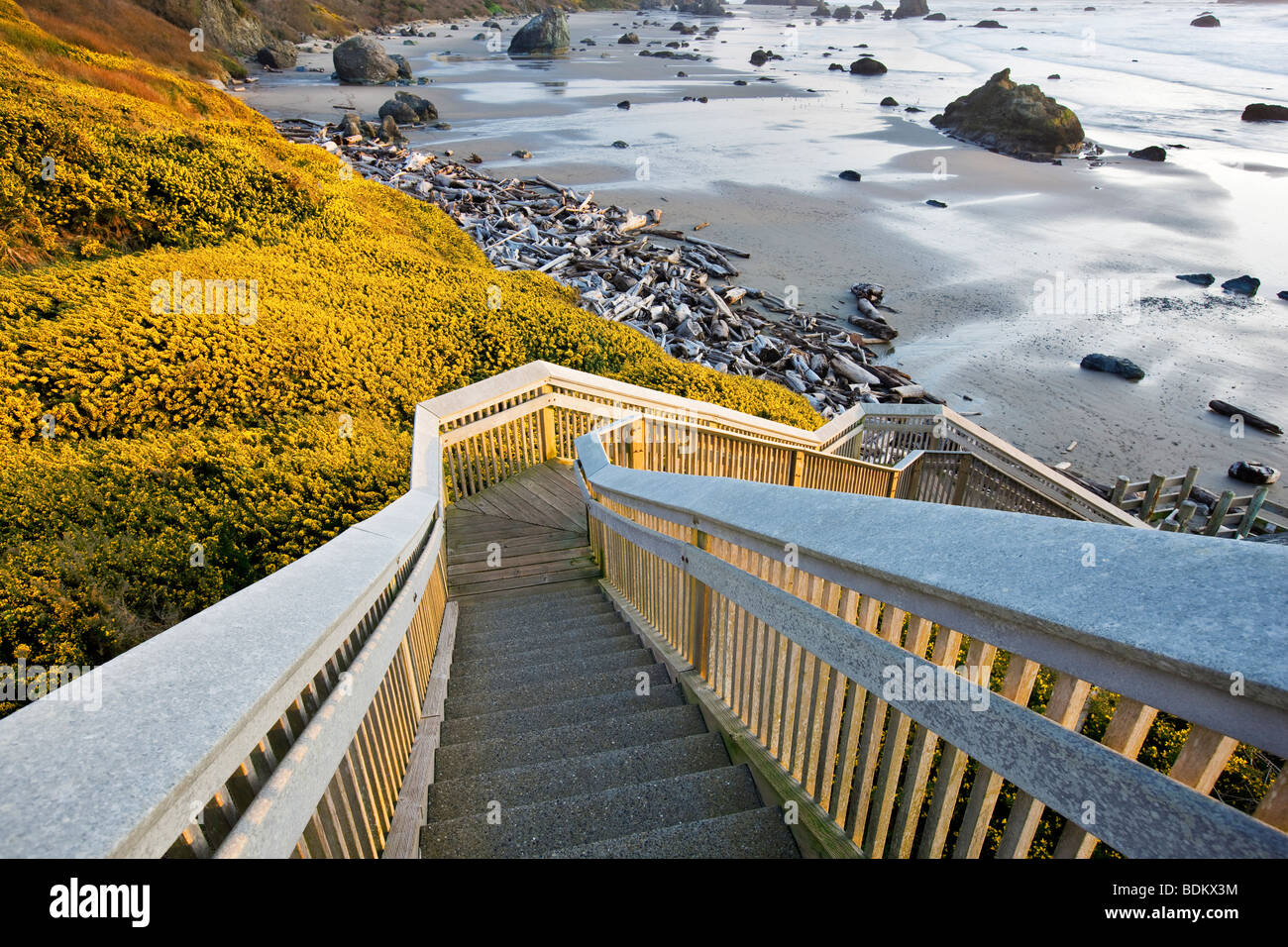 Bandon Beach with blooming gorse and stairway to beach. Oregon - Stock Image