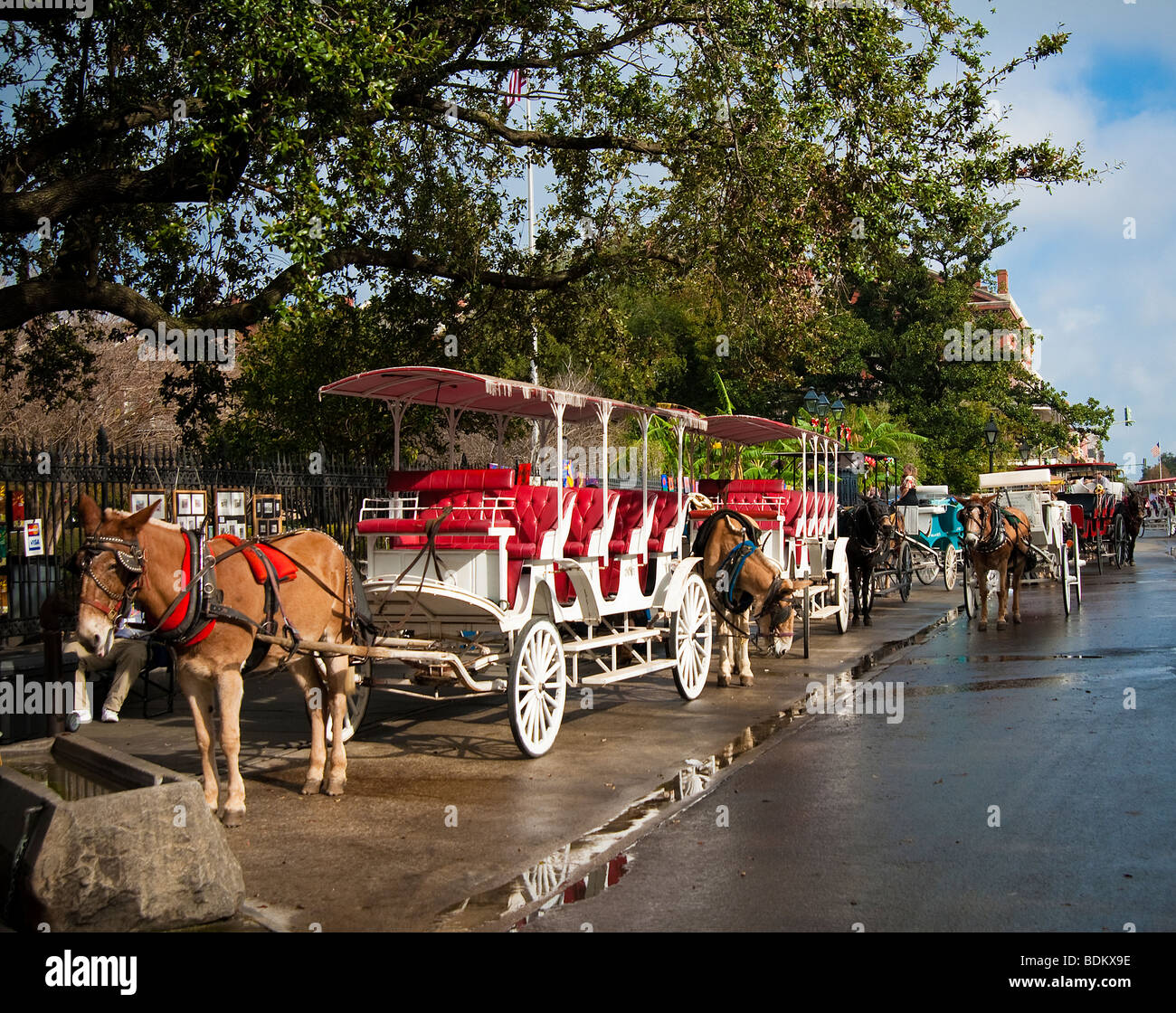 Siteseeing horse drawn carriages on Jackson Square in New Orleans, Louisiana - Stock Image