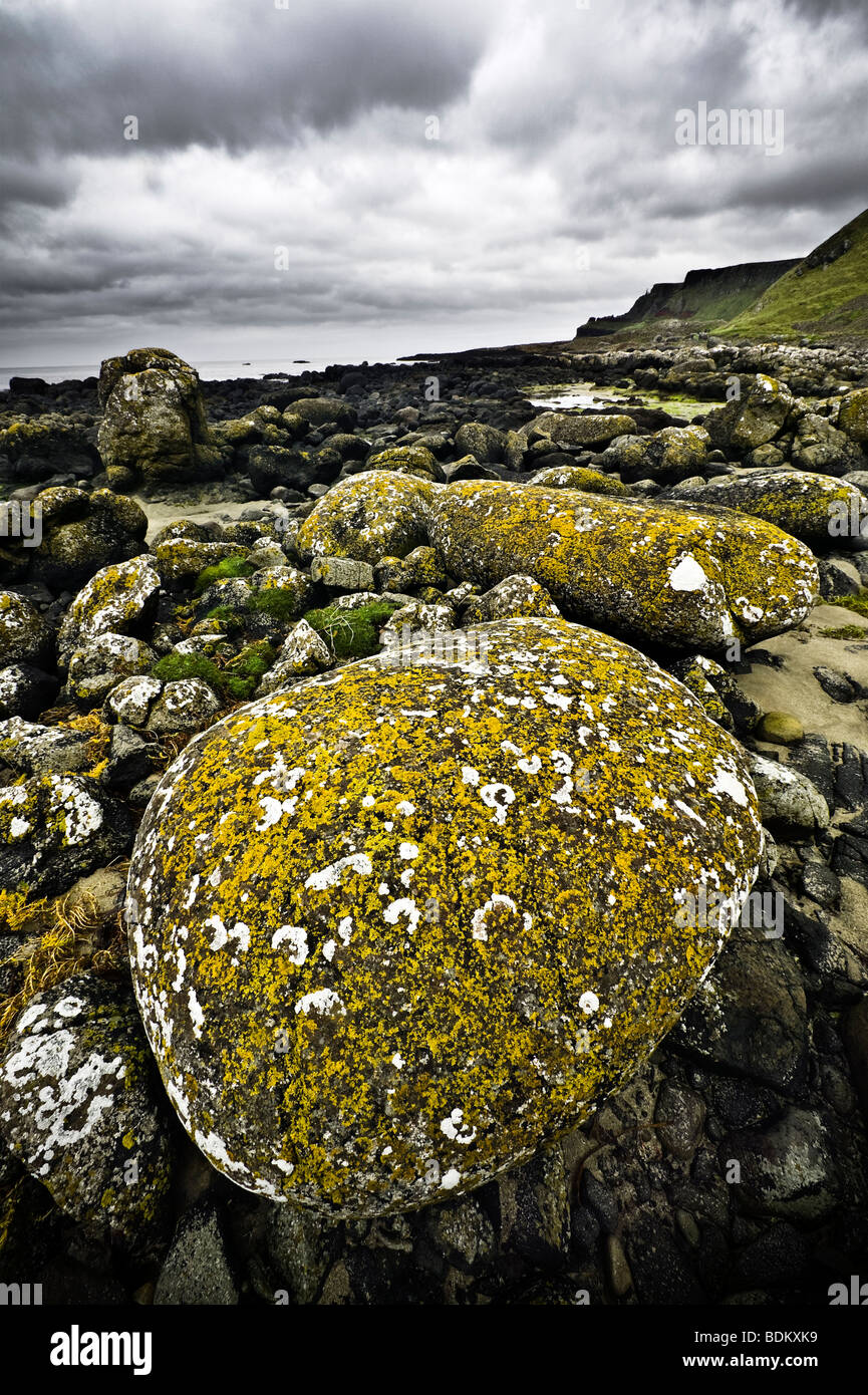 Northern Ireland, Antrium County, Giant's Causeway, lichen-covered boulders along the coastline - Stock Image