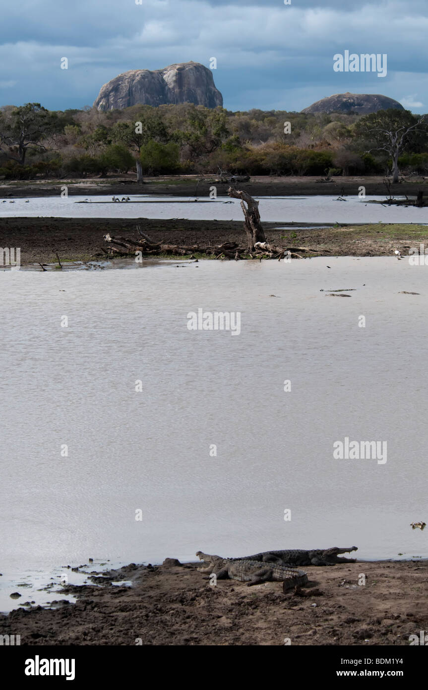 Elephant Rock Yala West (Ruhuna) National Park Mugger or Marsh crocodile (Crocodylus palustris ) in foreground on - Stock Image