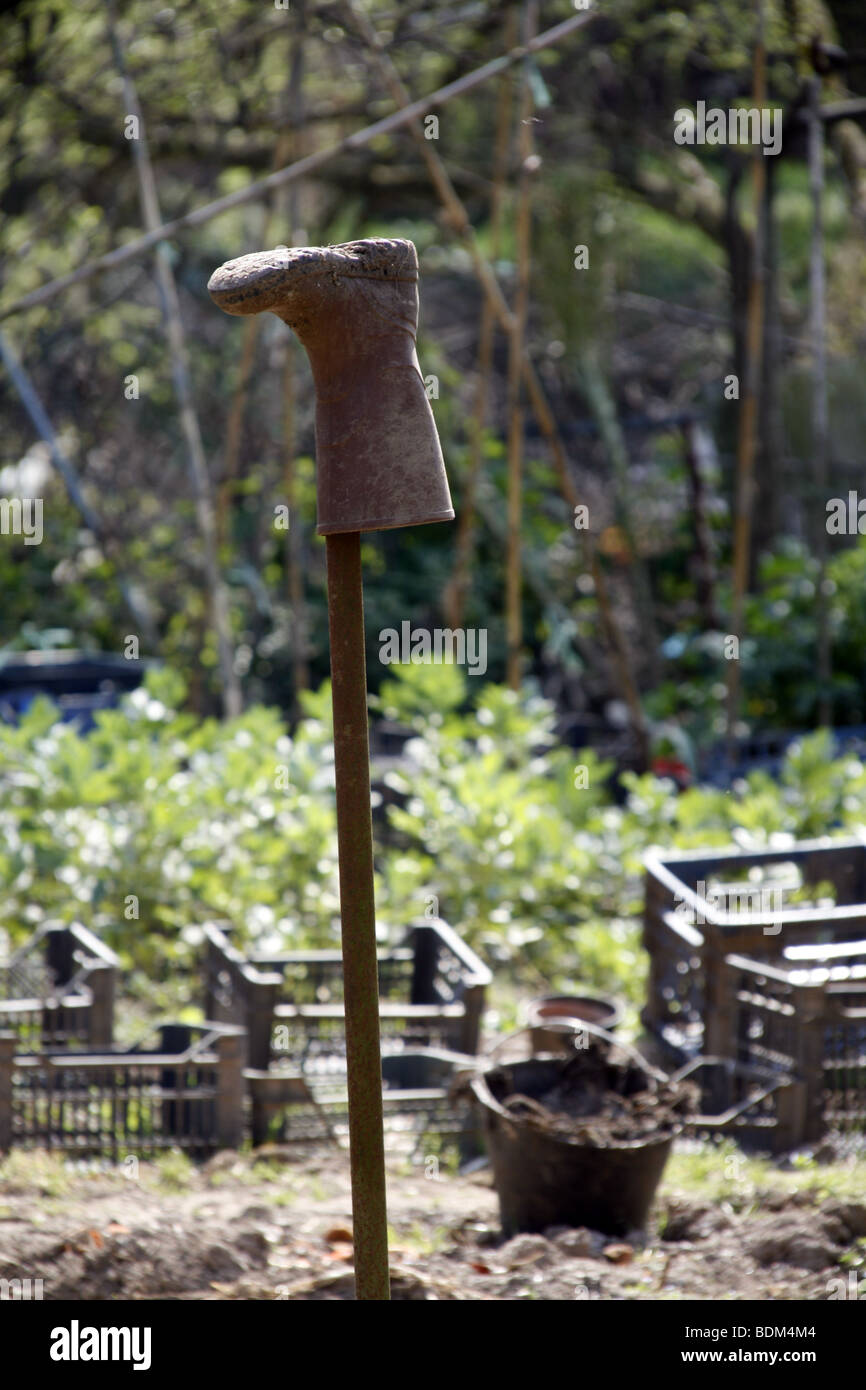 one dirty wellington boot in allotment patch garden in country Stock Photo